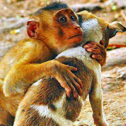 Einander helfen ist wichtig, unabhängig davon, welcher Spezies jemand angehört.