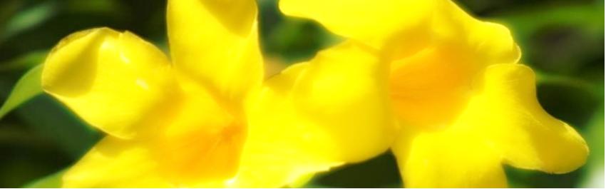 sensitivnet.de & Sonnenau-Frühauf-Institut zur Förderung & Erforschung von Ganzheitsentwicklung der Gesellschaft & des Einzelnen, Inh. Christine Schüren - für ganzheitliche gesellschaftliche Höherentwicklung & so für unsere Mitwelt mit Natur, Tier & Mensch -